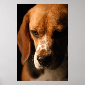 Beagle Portrait Print