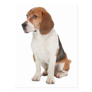 Beagle Postcard