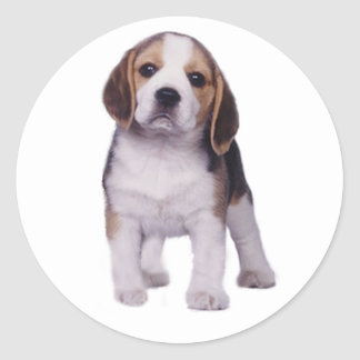 Beagle Pup Sticker