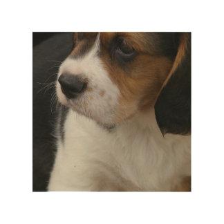 Beagle Pup Wood Print