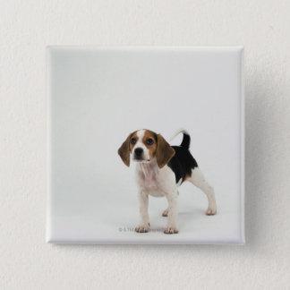Beagle puppy 15 cm square badge