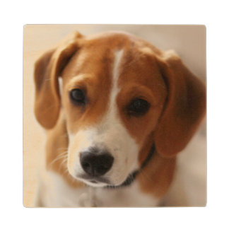 Beagle Puppy 2 Wood Coaster