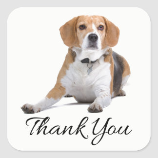 Beagle Puppy Dog Black Thank You Canine Square Sticker