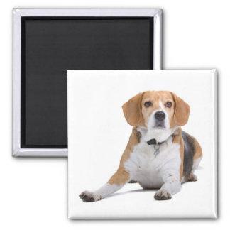 Beagle Puppy Dog Fridge Magnet