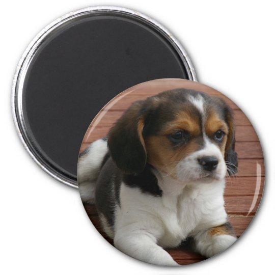 Beagle Puppy Dog Magnet