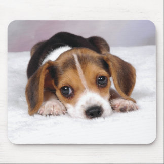 Beagle Puppy Dog Mouse Mat