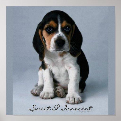 Beagle Puppy Dog Photo Poster