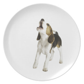 Beagle Puppy Dog Plate