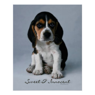 Beagle Puppy Dog Poster