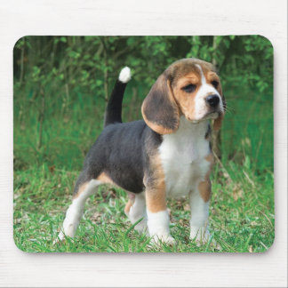 Beagle Puppy Mouse Mat