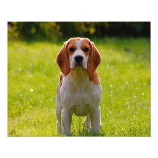 beagle puppy on guard 11.5 cm x 14 cm flyer