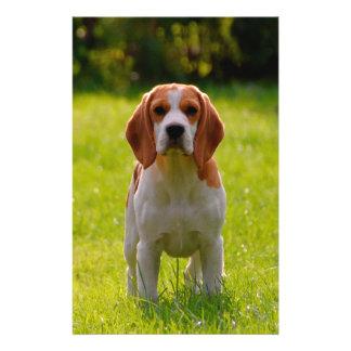 beagle puppy on guard 14 cm x 21.5 cm flyer