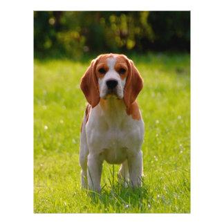 "beagle puppy on guard 8.5"" x 11"" flyer"