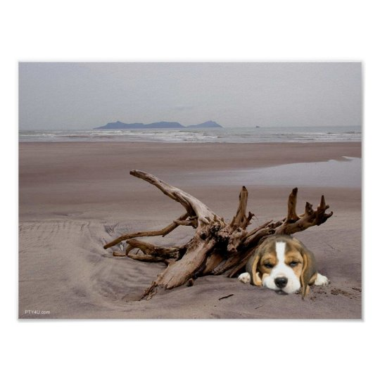 Beagle Puppy On The Beach Poster
