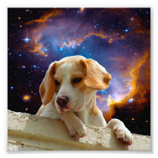 beagle puppy on the wall looking at the universe art photo