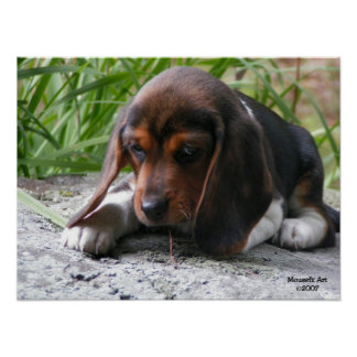 Beagle Puppy Poster