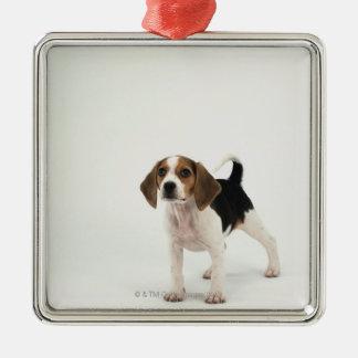 Beagle puppy Silver-Colored square decoration