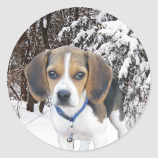 Beagle Puppy Snowy Woods Stickers