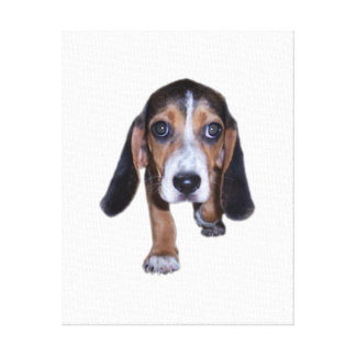 Beagle Puppy Walking - Pick Your Background Color Gallery Wrapped Canvas