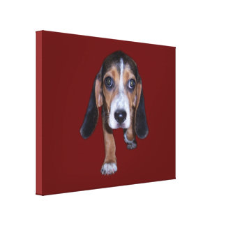 Beagle Puppy Walking - Red Background Color Canvas Prints
