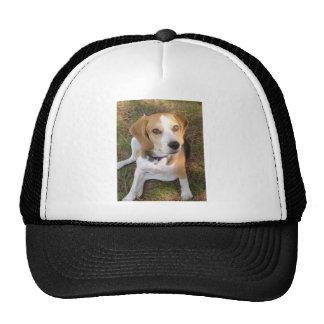 Beagle sitting 2.png cap