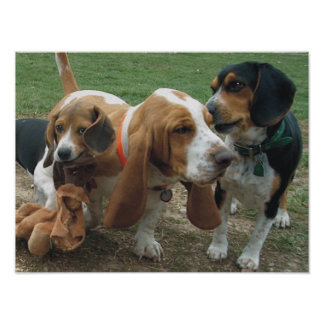 Beagles & Basset Hound Friends Poster