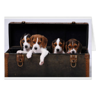 Beagles Greeting Card