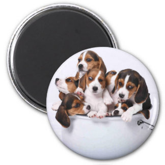 Beagles in Bucket Magnet