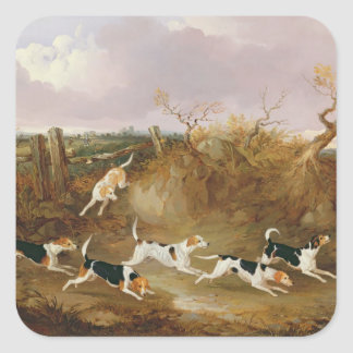 Beagles in Full Cry, 1845 (oil on canvas) Square Sticker