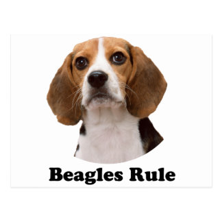 Beagles Rule Postcard