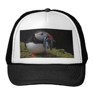 Beak Full of Fish Puffin Hat
