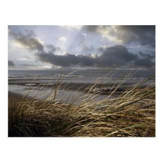 beale reeds postcard