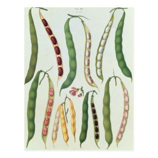 Beans Postcard