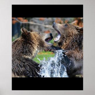 Bear Bears Animals Water Splash Wildlife Nature Poster