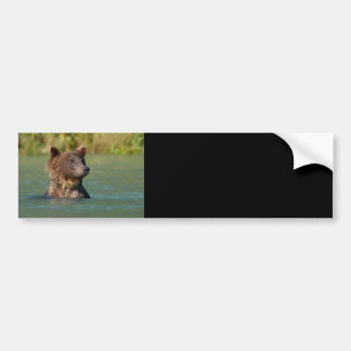 bear bumper sticker