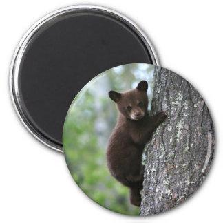 Bear Cub Climbing a Tree 6 Cm Round Magnet