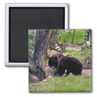 Bear Cubs Smell the Flowers Square Magnet