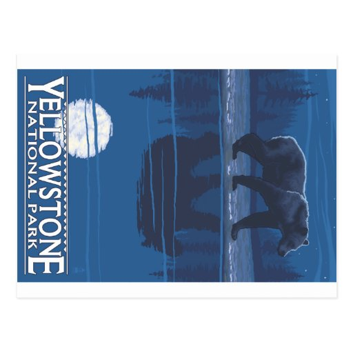 Bear in Moonlight - Yellowstone National Park Postcards