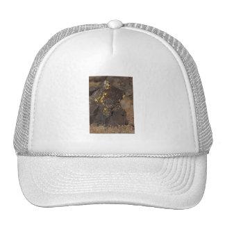 Bear in the Rock Mesh Hats