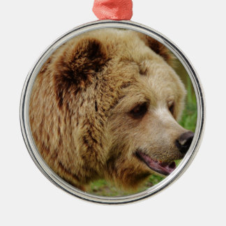 Bear in the wild christmas ornament