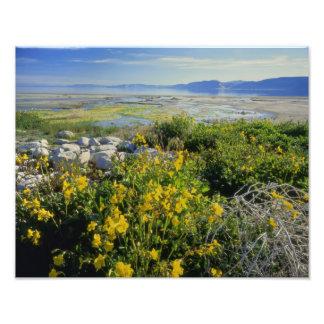 BEAR LAKE, UT, US, monkey-flower & tumbleweed, Art Photo