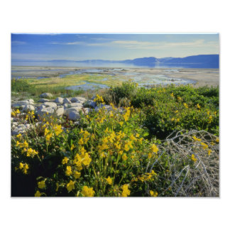 BEAR LAKE, UT, US, monkey-flower & tumbleweed, Photo Print