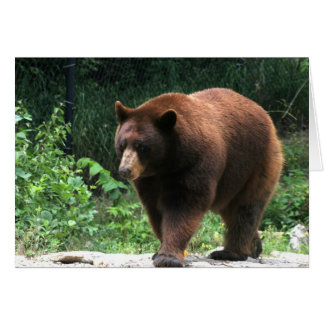Bear Photography Greeting card