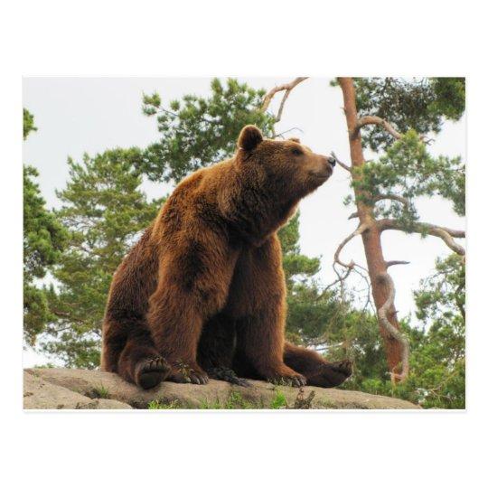 BEAR SITTING ON A ROCK POSTCARD