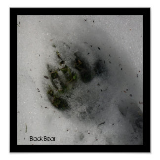 Bear Track Poster