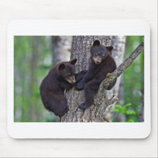 Bear Twins Tree Climbing Branches Cute Animals Art Mouse Pads