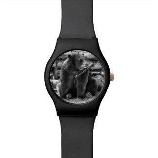 Bear Watch