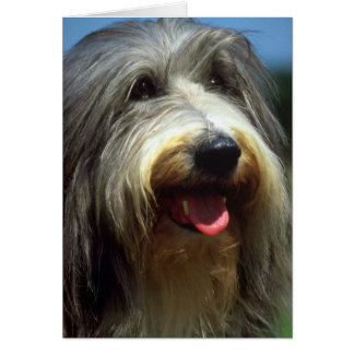 Bearded Collie Card