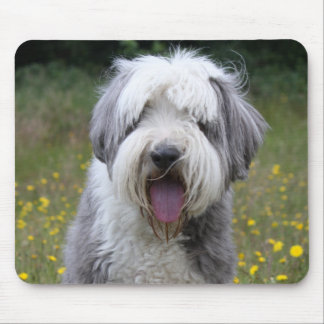Bearded Collie dog beautiful photo, gift Mouse Pad