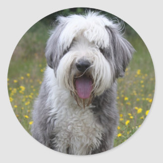 Bearded Collie dog beautiful photo stickers